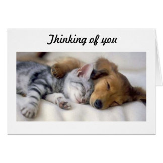Cat with dog sympathy card