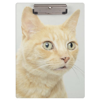 Cat with eyes open wide clipboard