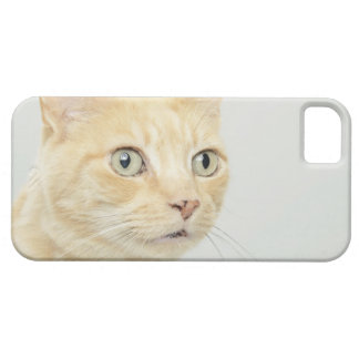 Cat with eyes open wide, close-up barely there iPhone 5 case