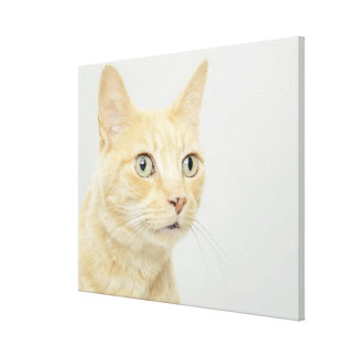 Cat with eyes open wide, close-up canvas print