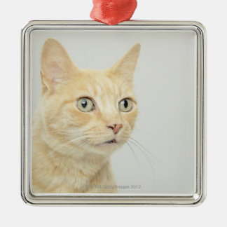 Cat with eyes open wide, close-up Silver-Colored square decoration