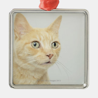 Cat with eyes open wide Silver-Colored square decoration