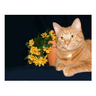 Cat with flowers postcard