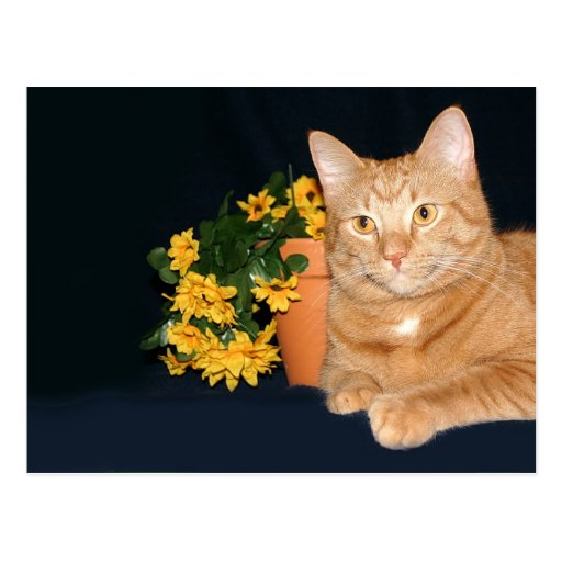 Cat with flowers post card