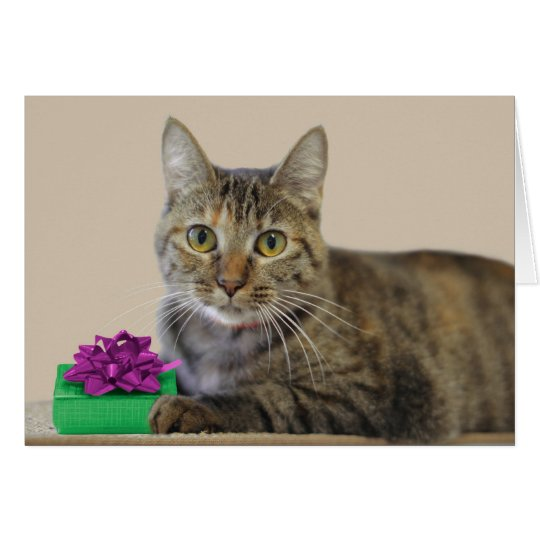 Cat with Gift Birthday Card