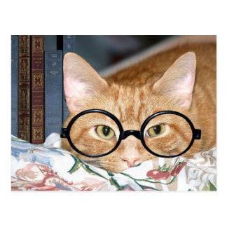 Cat with glasses and books postcard