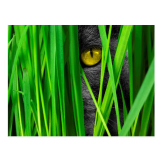 Cat with Green Leaf and Special Eyes Postcard
