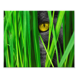 Cat with Leaf and Special Eyes Photographic Print