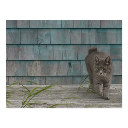 Cat with no tail postcard
