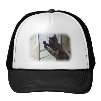 Cat with PC Mesh Hat