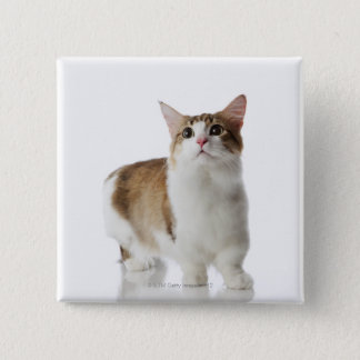 Cat with short feet 15 cm square badge