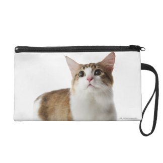 Cat with short feet wristlet