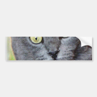 Cat With Staring Eyes Bumper Sticker