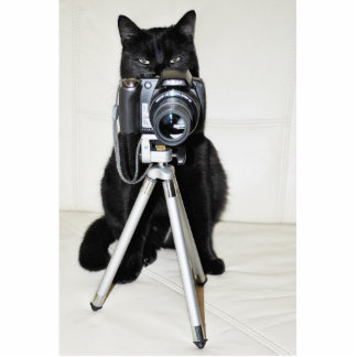 Cat with the camera - photo sculpture