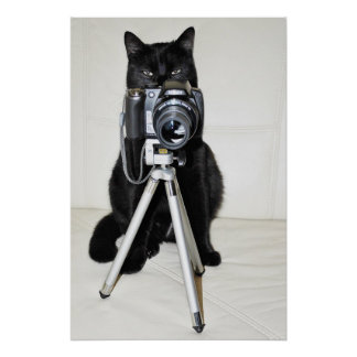 Cat with the camera - poster