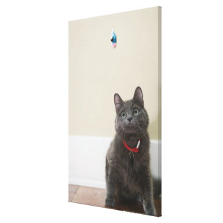 Cat with toy canvas prints