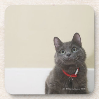 Cat with toy drink coasters