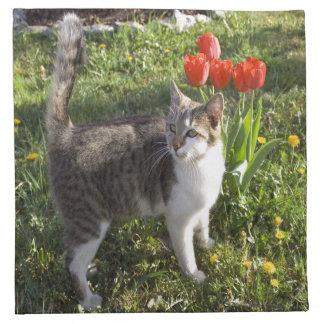 Cat With Tulips Napkin