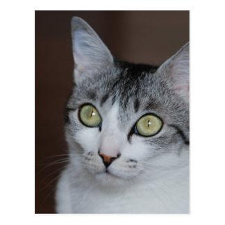 CAT - WOWCOCO POSTCARD