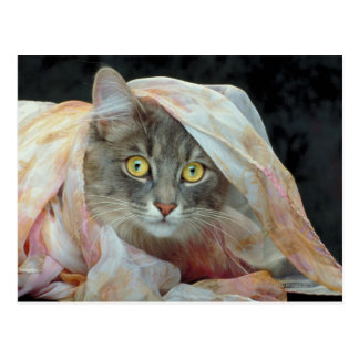Cat wrapped in cloth postcards