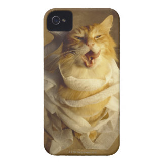 Cat wrapped in medical gauze Case-Mate iPhone 4 case