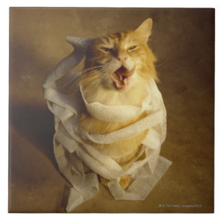 Cat wrapped in medical gauze tile