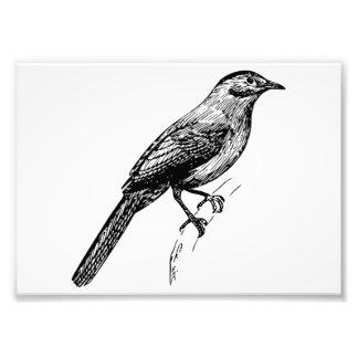 Catbird Art Photograph