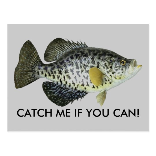 CATCH ME IF YOU CAN! POSTCARD