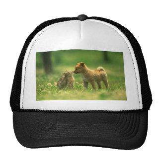 catdog love cap