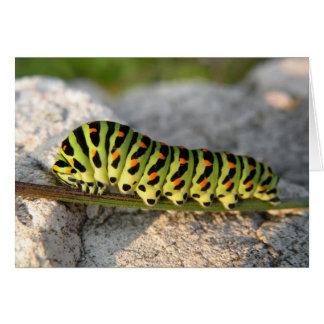 caterpillar card