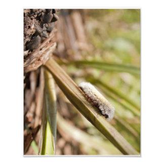 caterpillar climbing photo
