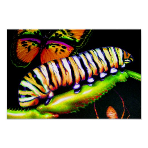 Caterpillar with Butterfly and Spider Art Posters