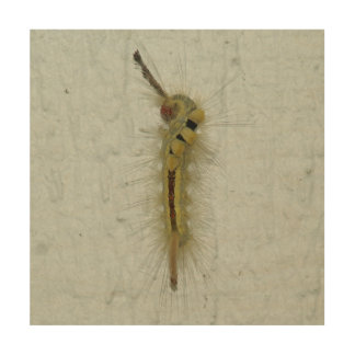 Caterpillar, Wood Photo Print