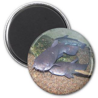 Catfish fishing zoo 6 cm round magnet
