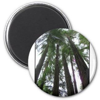 Cathedral  Grove. British Columbia Gylliayn Art 6 Cm Round Magnet