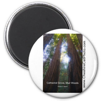Cathedral Grove, Muir Woods California Products Magnets