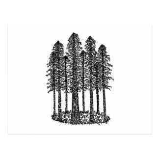 Cathedral Ring (Coastal Redwoods Sketch) Postcard