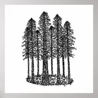 Cathedral Ring (Coastal Redwoods Sketch) Poster