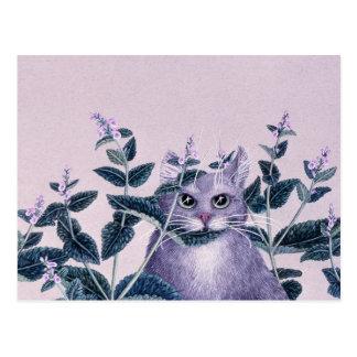 Catnip Postcard