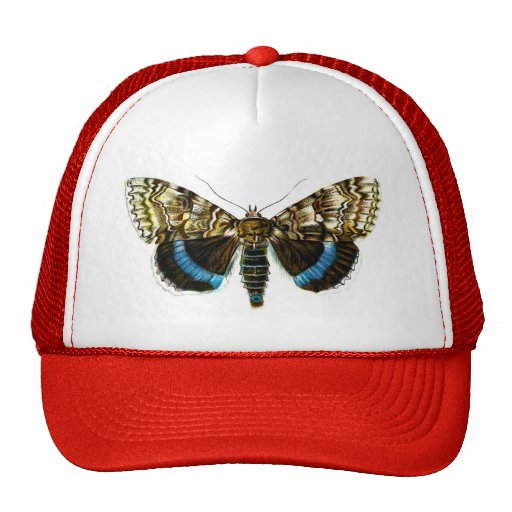 Catocala fraxini mesh hat