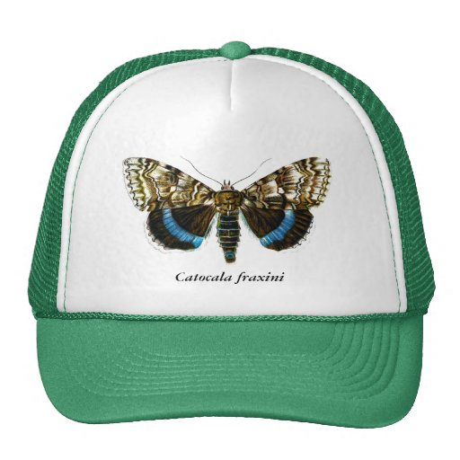 Catocala fraxini mesh hats