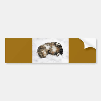 cats_and_snow_ (5) cute pets animals kittens funny bumper sticker