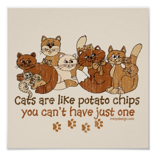 Cats are like potato chips posters