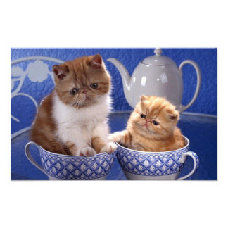cats art photo