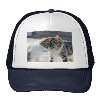 cats trucker hat