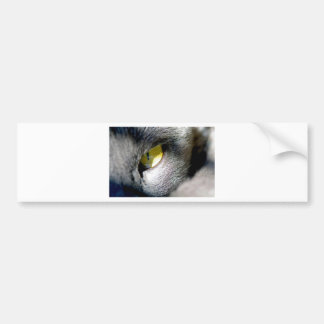 Cat's Eye Car Bumper Sticker