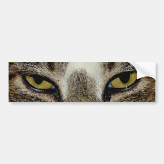 Cat's eye bumper sticker