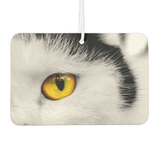 CAT'S EYE - WHAT YOU LOOKING AT.jpg