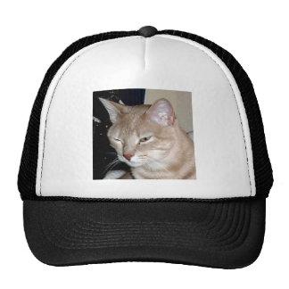 CATS HATS