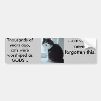 Cats have good memories bumper sticker
